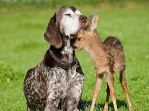 DogSnugglesWithFawnWikipedia6a00d8341bf67c53ef017616923226970c
