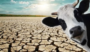 cow_farts_global_warming_drought